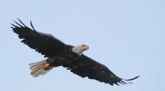 Wildlife on Long Island