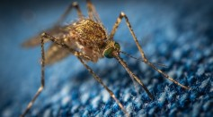 macro-photo-of-a-brown-mosquito-1685610