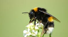 Science Times - Bees at Work: Watch How They Join Forces to Unscrew Soda Bottle