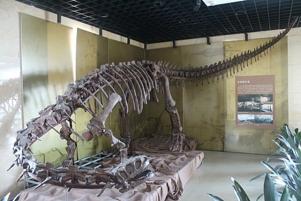 Science Times - Giant Dinosaur Skeleton Discovered in China Almost 70-Percent Complete; Paleontologists Say This 26-Feet Jurassic Discovery is 180 Million Years Old