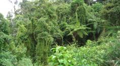 Bamboo and ferns in Peru rainforest