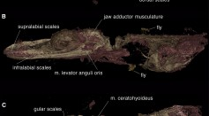Mistaken Bird Fossils Is Found to Be a Mystery Small Lizard, Reanalysis Showed