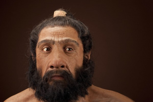 Homo Neanderthalensis Adult Male Reconstruction
