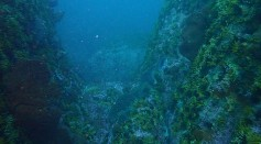 Science Times - Marine Ecosystems Can Bring Sea Life Back After Mass Extinctions; It May Take 4 Million Years to Recover, New Study Reveals
