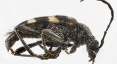 Science Times - Ancient Beetle Discovered in Fossilized Poop: This 230-Million-Year-Old Find is the First New Species Found in an Unusual Place