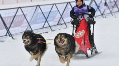 Science Times - Sled Dogs in the 17th Century Turned to Cannibalism, According to New Analysis