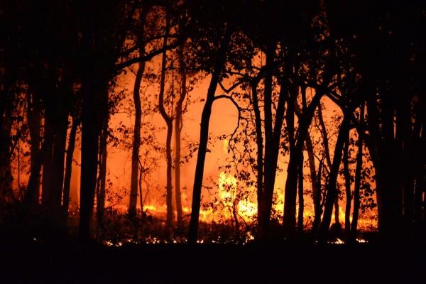 photo-of-burning-forest-4621457