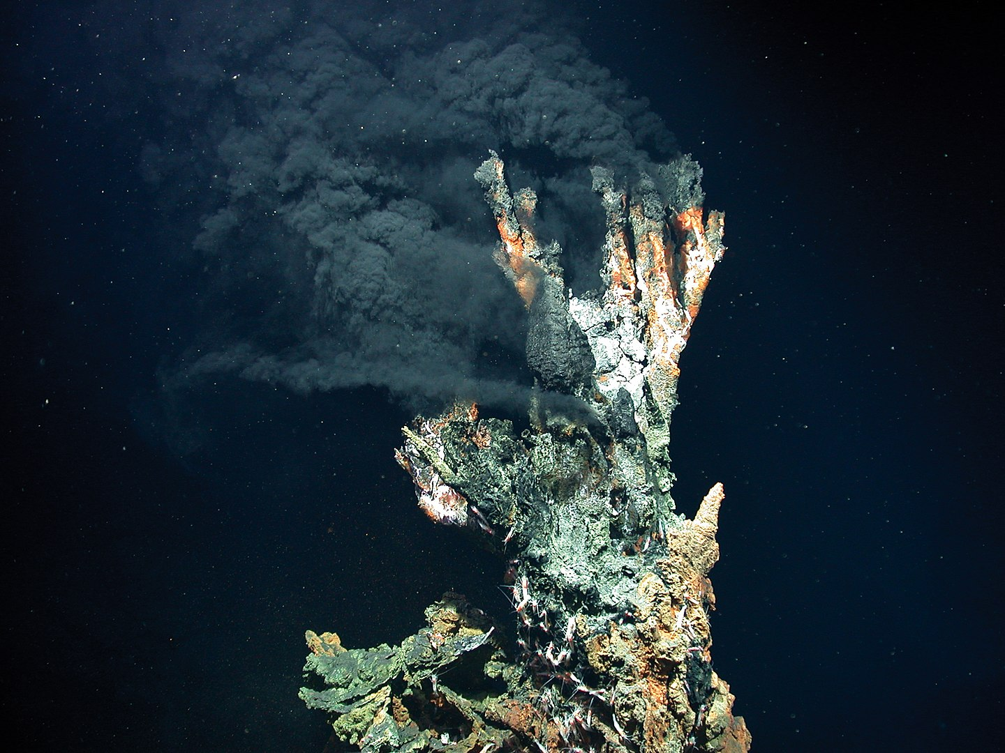 How Deep-Sea Hydrothermal Vents Create Thriving Microbial Food Webs - Science Times