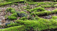 Science Times - Earliest Land Plants 400 Million Years Ago Possibly Modified Earth's Climate Regulation