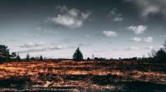 brown-open-field-2305169