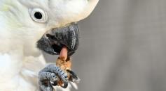 Australia-animal-prison-wombat-kangaroo-emu