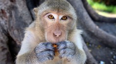 Science Times - Monkey Brain Revealed in World's 1st High-Resolution 3D Image; Potential for Treating Human Illnesses