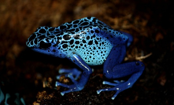 How Poisonous Animals Protect Themselves from Their Own Poison?