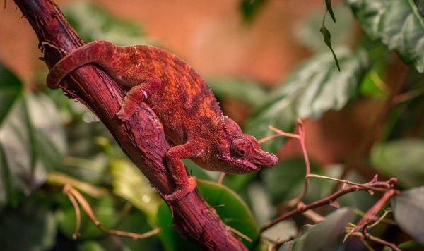 Chameleon-Inspired Robot From South Korea Changes Color in Real-Time to Match Its Background