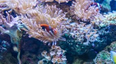 Coral Reefs in More Polluted, High Traffic Water Handled Extreme Heats Better Than Untouched Environments, Study Finds