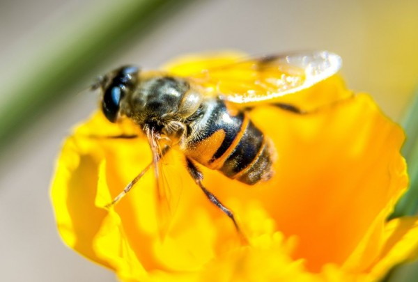 FRANCE-POLITICS-ENVIRONEMENT-AGRICULTURE-BEES