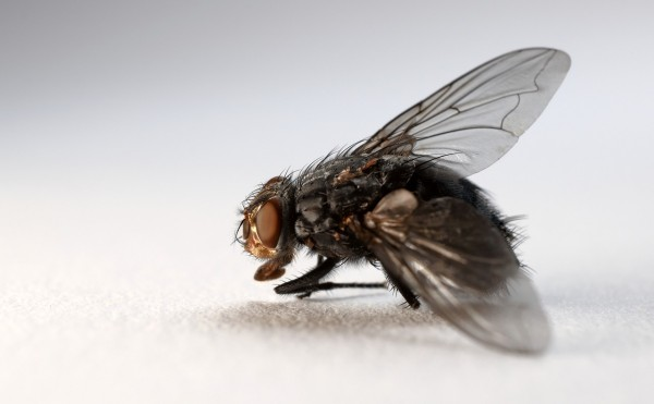 Lonely Fruit Flies Eat More, Sleep Less Like Humans Living During the Pandemic