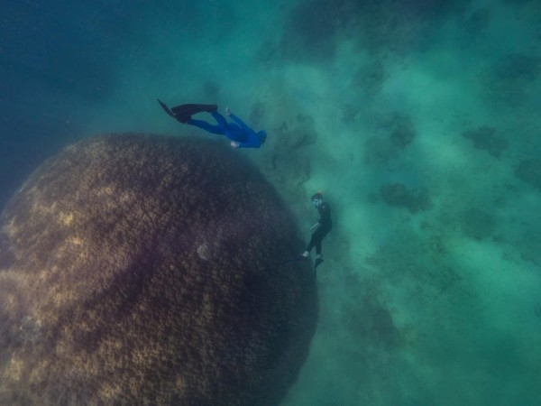 Muga dhambi is the widest coral structure recorded on the Great Barrier Reef.