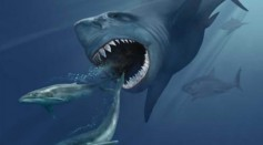 Evidence of Megatoothed Shark Attack on Whale 15 Million Years Ago Preserved in Ancient Tooth