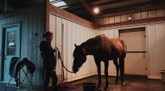 Science Times - Ivermectin: You Can Buy This if You're in Las Vegas, and Show a Picture of Yourself With Your Horse