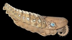 Half A Meter Ancient Fossil Species From Extinct Animal Group in Cambrian Rocks 500 Million Years Ago Found in Canada