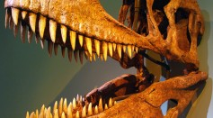 Carcharodontosaurus.jpg