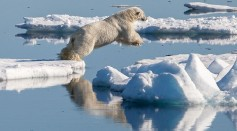 Science Times - Polar Bear Populations See 10-Percent Loss in Generic Diversity; Study Cites Rapid Arctic Ice Melting as Primary Driver for the Decline
