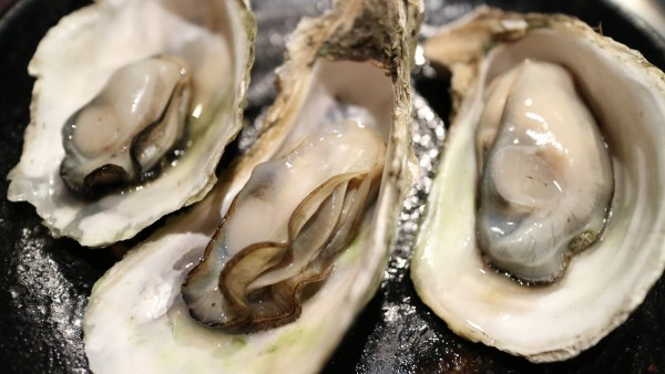 Oysters Within the Deepwater Horizon Oil Spill Region Developed Debilitating Tissue Abnormalities