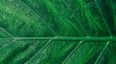 green-leaf-1048033/
