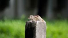 chipmunk-on-grey-concrete-pole-2684010/