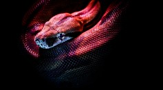 photo-of-a-red-snake-3280908/