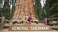 Science Times - World's Biggest Tree Can Still Be Saved; Firefighters Combating Wildfires Ravaging the US Are Optimistic About It