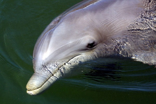 Dolphins Plus Marine Mammal Research and Education Center
