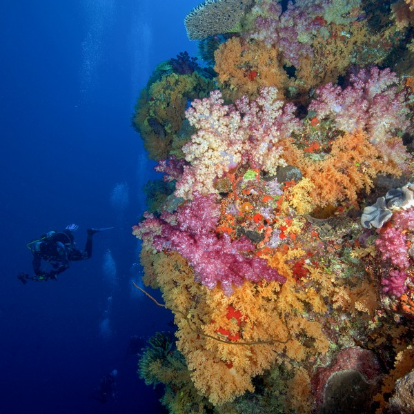 Coral Reefs in Tonga