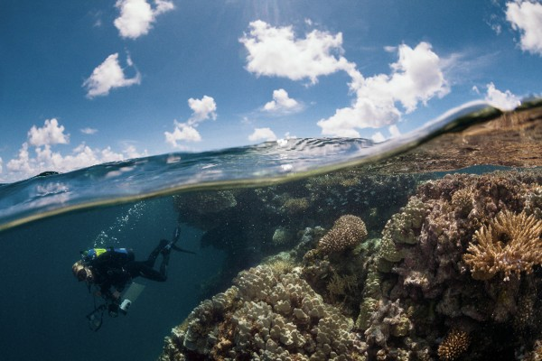 Scientific Diver on the Global Reef Expedition in French Polynesia