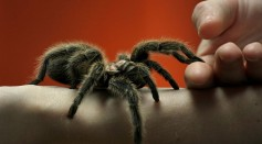 Augmented Reality Platform Act As Exposure Therapy to Help People Overcome Their Fear of Spiders