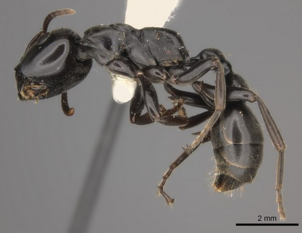 SCIENCE TIMES - Ant Chemicals Used to Combat Plant Diseases; New Study Shows How They Can Substitute Pesticides