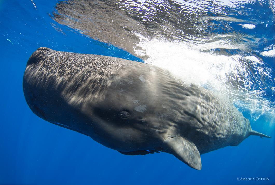 Công trình nghiên cứu về cá voi của nhà khoa học Carleton đã giúp phim tài liệu giành được giải Emmy