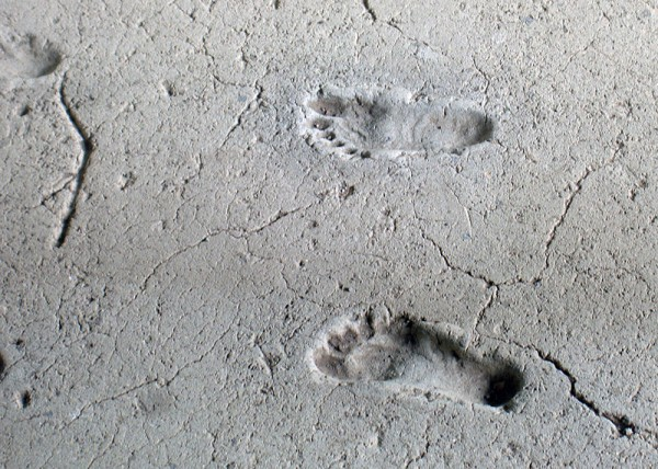 Fossilized Footprints From 21,000 Years Ago Fuels New Speculation When Humans Arrived in the Americas