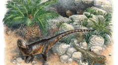 Life reconstruction of P. milnerae gen. et sp. nov. among the fissures of Pant-y-ffynnon and three individuals of the rhynchocephalian lepidosaur Clevosaurus cambrica during the Late Triassic.