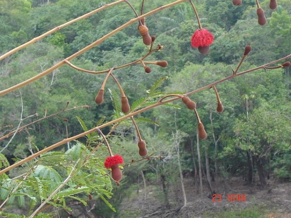 Science Times - 'Mystery Plant' Species Unveiled; New Type of the Discovery in Amazon Rainforests Confirmed 50 Years After First-Ever Unearthing