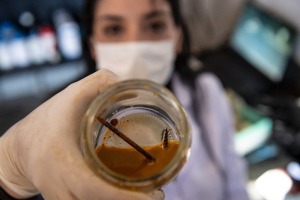 Chilean biotechnologist Nadac Reales shows a nail and screw inside a jar with metal-eater bacteria in her laboratory at a mining site in Antofagasta