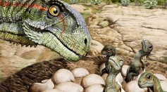 Patagonian fossils show Jurassic dinosaur had the herd mentality