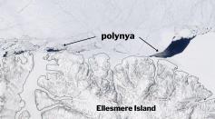 Arctic Polynya