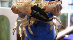 Sydneysiders Flock To Fishmarkets At Christmas Time