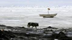 U.S. Scientists Study Possible Global Warming Effects In Alaska