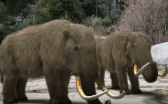Mammoths Hunted for their Hides
