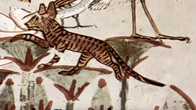 Ancient Birds, Bats & Other Animals Painting Found On The ...