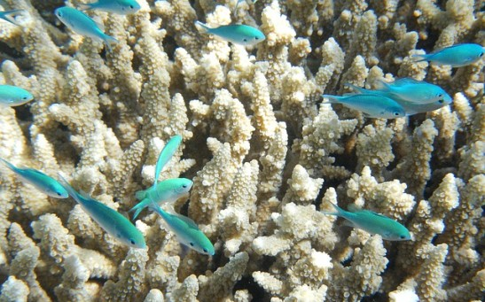 Coral Reef Thriving with Fish