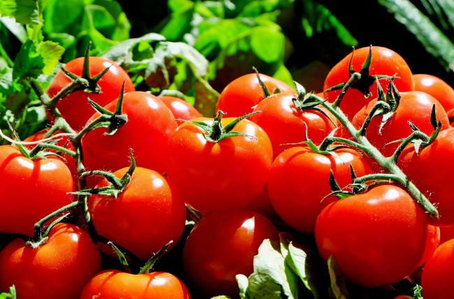 One of the fruits that the researchers were able to harvest from lunar and Martian soil was tomatoes.
